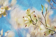 Tree Blossoms Digital Art Prints - Dogwood Against Blue Sky Print by Lois Bryan
