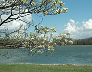 Dogwood Lake Prints - Dogwood at Freeman Lake Print by Steven Townsend