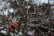Karen Casey-Smith - Dogwood in Winter