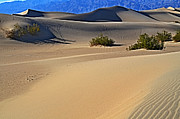 Mesquite Flat Dunes Posters - Doing the Dunes Poster by Craig Carter