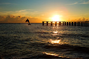 Dolphin Jumping Out Of The Sea In Florida Print by Fizzy Image
