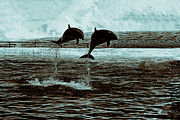 Dolphin Photo Framed Prints - Dolphin Pair-In the Air Framed Print by Douglas Barnard