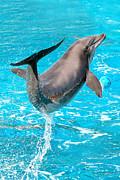 Dolphin Plays Print by Michal Bednarek