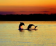 Reflective Waters Posters - Dolphin Serenade Poster by Karen Wiles
