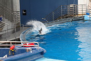 Aquarium Art - Dolphin Show - National Aquarium in Baltimore MD - 1212131 by DC Photographer