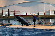 Sealife Prints - Dolphin Show - National Aquarium in Baltimore MD - 1212138 Print by DC Photographer