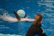 Harbor Photos - Dolphin Show - National Aquarium in Baltimore MD - 1212156 by DC Photographer