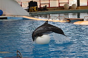 Seaport Metal Prints - Dolphin Show - National Aquarium in Baltimore MD - 1212161 Metal Print by DC Photographer