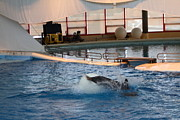Dolphin Show - National Aquarium In Baltimore Md - 1212167 Print by DC Photographer