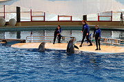 Sealife Photos - Dolphin Show - National Aquarium in Baltimore MD - 1212188 by DC Photographer