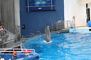 Tourist Posters - Dolphin Show - National Aquarium in Baltimore MD - 1212203 Poster by DC Photographer