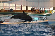 Aquatic Prints - Dolphin Show - National Aquarium in Baltimore MD - 1212214 Print by DC Photographer