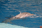 Harbor Art - Dolphin Show - National Aquarium in Baltimore MD - 1212218 by DC Photographer
