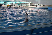 Show Photo Acrylic Prints - Dolphin Show - National Aquarium in Baltimore MD - 121222 Acrylic Print by DC Photographer