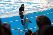 Tourist Prints - Dolphin Show - National Aquarium in Baltimore MD - 1212227 Print by DC Photographer