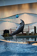 Dolphin Show - National Aquarium In Baltimore Md - 1212236 Print by DC Photographer