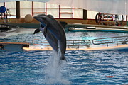 Inner Framed Prints - Dolphin Show - National Aquarium in Baltimore MD - 1212247 Framed Print by DC Photographer