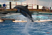 Seaport Photo Posters - Dolphin Show - National Aquarium in Baltimore MD - 1212248 Poster by DC Photographer