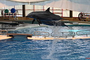 Dolphin Show - National Aquarium In Baltimore Md - 1212249 Print by DC Photographer