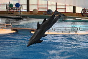 Historic Framed Prints - Dolphin Show - National Aquarium in Baltimore MD - 1212252 Framed Print by DC Photographer