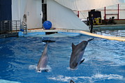Show Metal Prints - Dolphin Show - National Aquarium in Baltimore MD - 1212261 Metal Print by DC Photographer