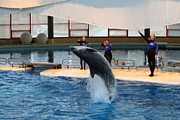 Tourist Prints - Dolphin Show - National Aquarium in Baltimore MD - 1212270 Print by DC Photographer