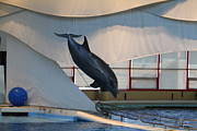 Baltimore Art - Dolphin Show - National Aquarium in Baltimore MD - 121229 by DC Photographer
