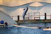 Dolphin Show - National Aquarium In Baltimore Md - 121254 Print by DC Photographer
