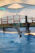 Dolphin Metal Prints - Dolphin Show - National Aquarium in Baltimore MD - 121266 Metal Print by DC Photographer
