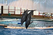 Md Prints - Dolphin Show - National Aquarium in Baltimore MD - 121279 Print by DC Photographer