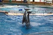 Fish Photo Prints - Dolphin Show - National Aquarium in Baltimore MD - 121281 Print by DC Photographer