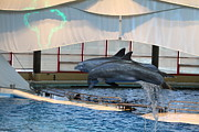 Inner Prints - Dolphin Show - National Aquarium in Baltimore MD - 121283 Print by DC Photographer