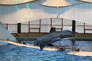 Tourist Posters - Dolphin Show - National Aquarium in Baltimore MD - 121284 Poster by DC Photographer