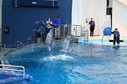 Dolphin Show - National Aquarium In Baltimore Md - 121291 Print by DC Photographer