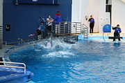Dolphin Show - National Aquarium In Baltimore Md - 121292 Print by DC Photographer