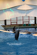 Aquatic Posters - Dolphin Show - National Aquarium in Baltimore MD - 121296 Poster by DC Photographer