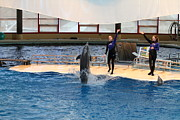 Landmark Art - Dolphin Show - National Aquarium in Baltimore MD - 121299 by DC Photographer