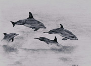 Dolphin Drawings Framed Prints - Dolphins Framed Print by Lucy D