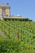 Pinot Noir Photos - Domaine Carneros by Jenny Hudson