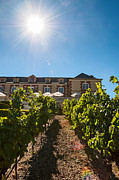 Grape Vineyards Prints - Domaine Carneros Sun - Winery and Vineyard with Sun Flare in Napa Valley California Print by Jamie Pham