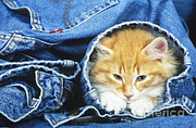 Tierbild Okapia - Domestic Cat In Bluejeans