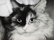 Long Haired Cat Posters - Domestic Cat Poster by Natasha Denger