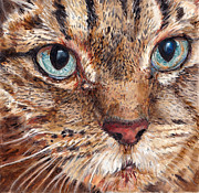 Pet Portraits Acrylic Prints - Domestic Tabby Cat by Enzie Shahmiri