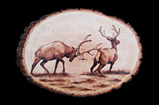 Elk Pyrography - Dominance by Minisa Robinson