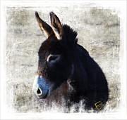 Donkey Mixed Media Framed Prints - Donkey Delight Framed Print by Ernestine Manowarda