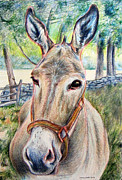 Donkey Drawings Framed Prints - Donkey Framed Print by Tina McCurdy