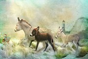 Donkey Foal Mixed Media Framed Prints - Donkeys Day Off Framed Print by Trudi Simmonds