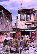 Tibetan Buddhism Prints - Donkeys in Jokhang Bazaar Print by Anna Lisa Yoder
