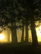 Guy Ricketts Photography Prints - Dont Breathe the Yellow Fog Print by Guy Ricketts