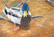 Roots Pastels Posters - Dont feed the ducks Poster by Jeanmarie DeKleine
